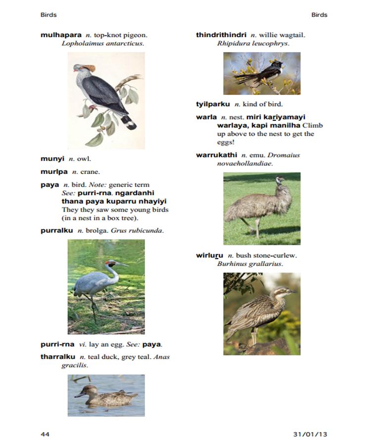 Dieri_Birds