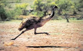 emu_runs