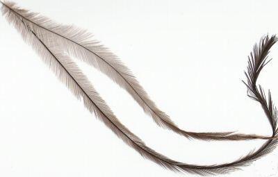 feathers_emu